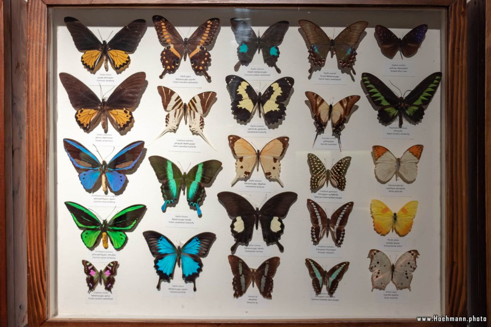 Georgia_NationalMuseum_015