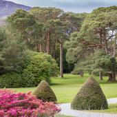Irland_Killarney_Nationalpark_002