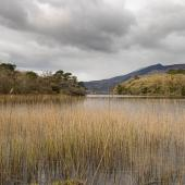 Irland_Killarney_Nationalpark_011