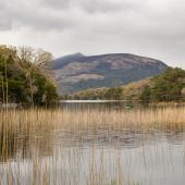 Irland_Killarney_Nationalpark_016