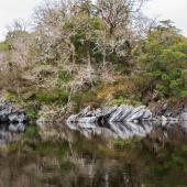 Irland_Killarney_Nationalpark_033
