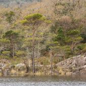 Irland_Killarney_Nationalpark_041