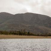 Irland_Killarney_Nationalpark_051