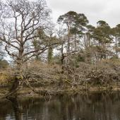 Irland_Killarney_Nationalpark_055