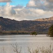 Irland_Killarney_Nationalpark_074