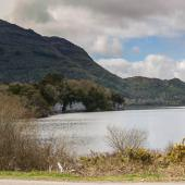 Irland_Killarney_Nationalpark_075