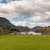Irland_Killarney_Nationalpark_078