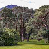 Irland_Killarney_Nationalpark_084